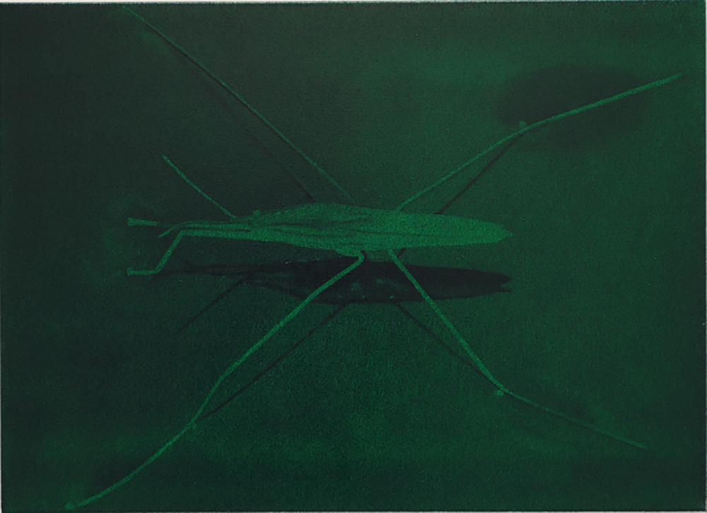Drone, B13, 2013, Oil on canvas, 65 x 90 cm 