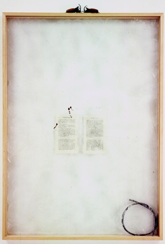 La Bibliothèque des animaux : Madame Edwarda (G. Bataille) Rebecca Horn, 1991, Vitrine, cadre en bois, 2 scarabés, caoutchouc, 102 x 72 x 4 cm   — Galerie Éric Hussenot, Paris