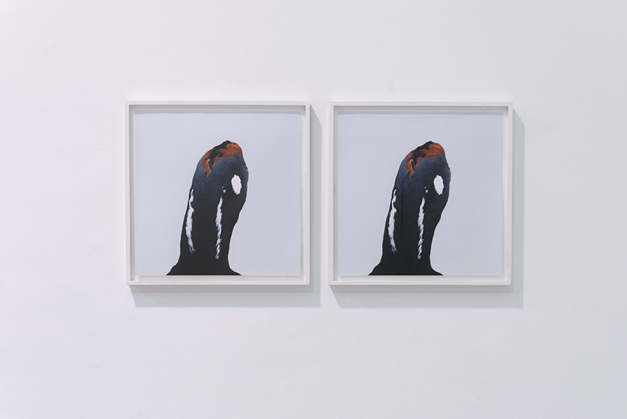 Untitled #2, Roni Horn, 1998-99, Ed #11/15, C-print, 55 x 55 cm   (framed 62 x 62 cm)   — Galerie Éric Hussenot, Paris